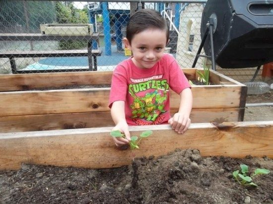 preschool garden (1)