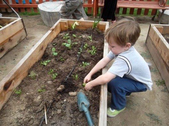 preschool garden (2)