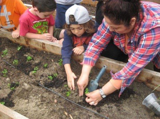 preschool garden (3)