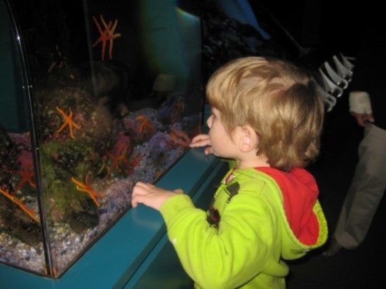Long Beach Aqarium Field Trip (4)