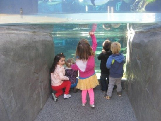 Long Beach Aqarium Field Trip