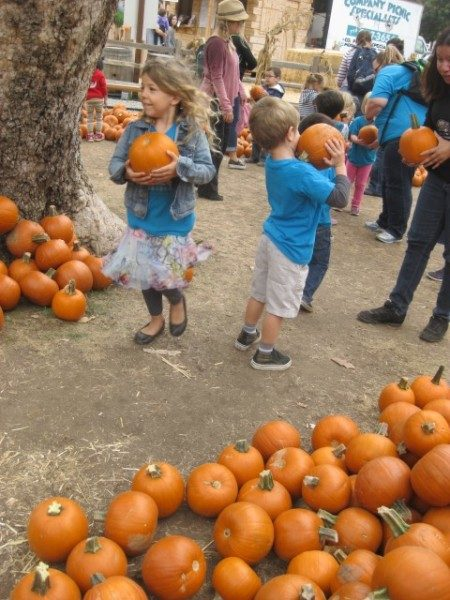 edgewater-preschool-pumpkin-patch-field-trip-16