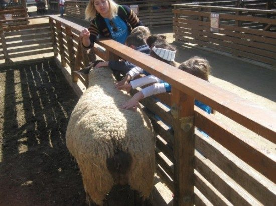 preschool field trip to farm-long beach (10)