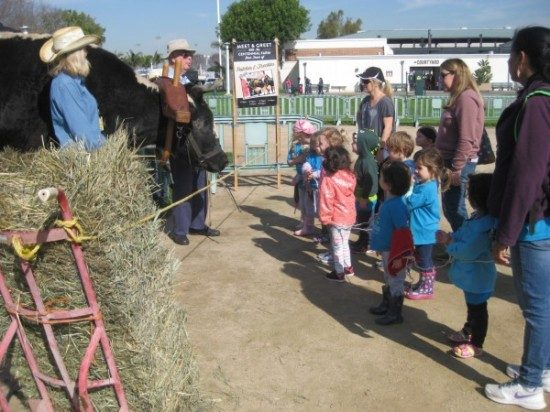 preschool field trip to farm-long beach (3)