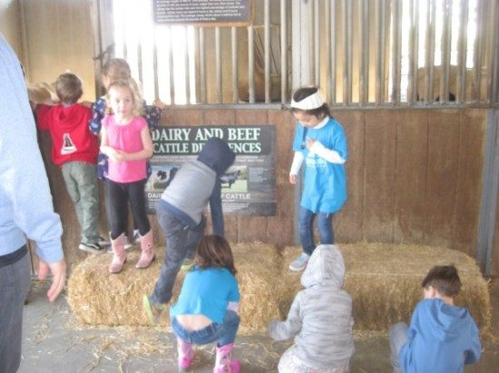 preschool field trip to farm-long beach (4)