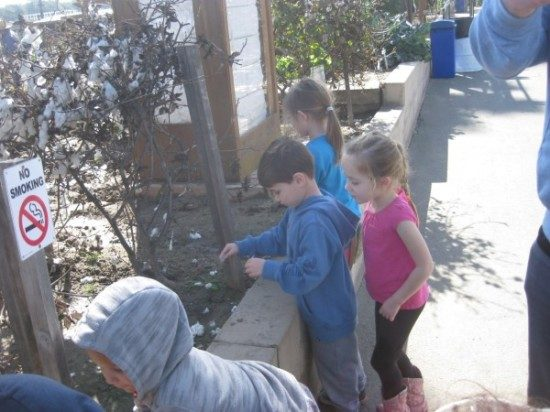 preschool field trip to farm-long beach (6)