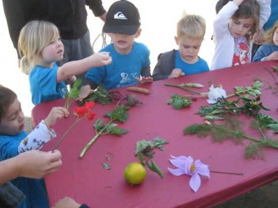 preschool field trip to farm-long beach (8)