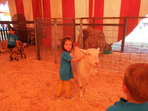 Edgewater Preschool Events and Trips (22)