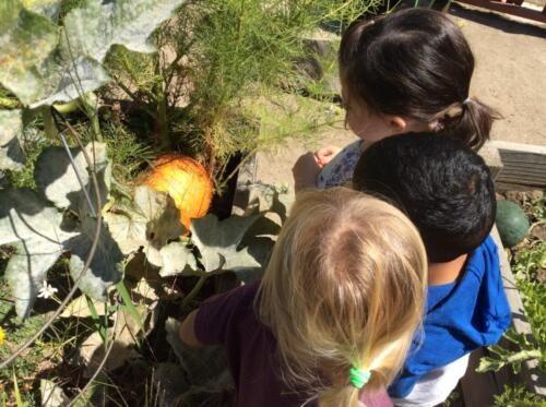 Edgewater Preschool Outdoor (13)
