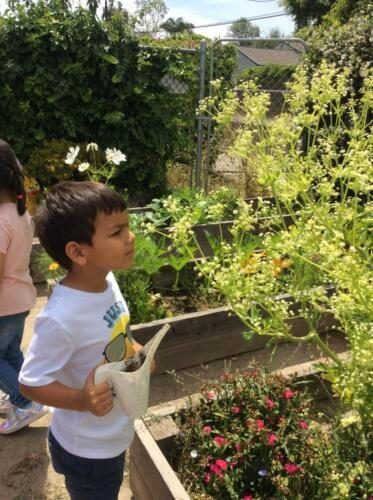 Edgewater Preschool Outdoor (19)