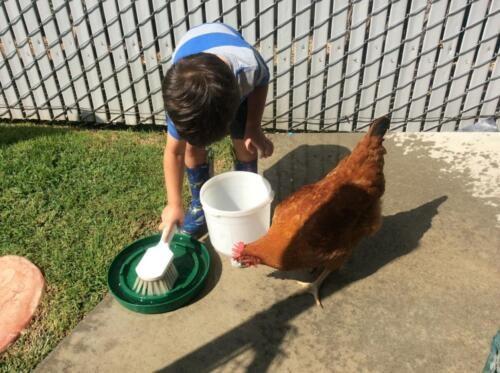 Edgewater Preschool Outdoor (21)
