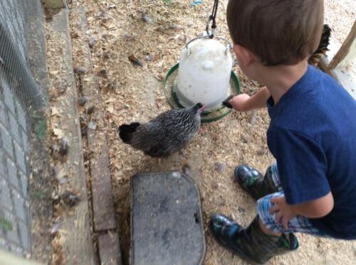 Edgewater Preschool Outdoor (22)