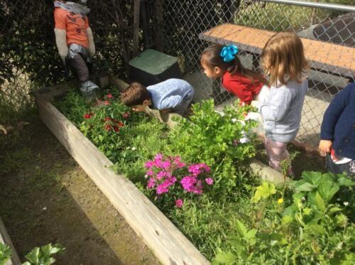 Edgewater Preschool Outdoor (8)